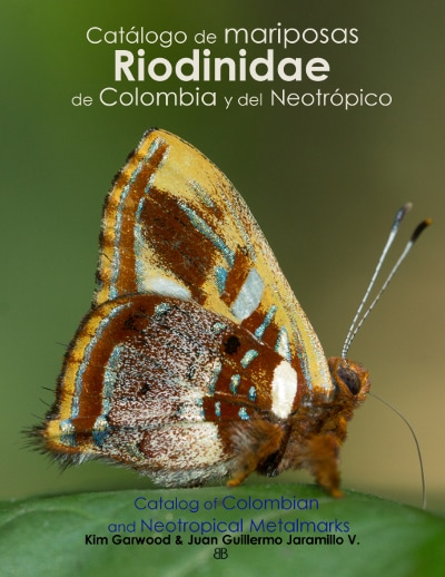 ImagenCover catalog Riodinidae Butterfly Family Butterflycatalogs